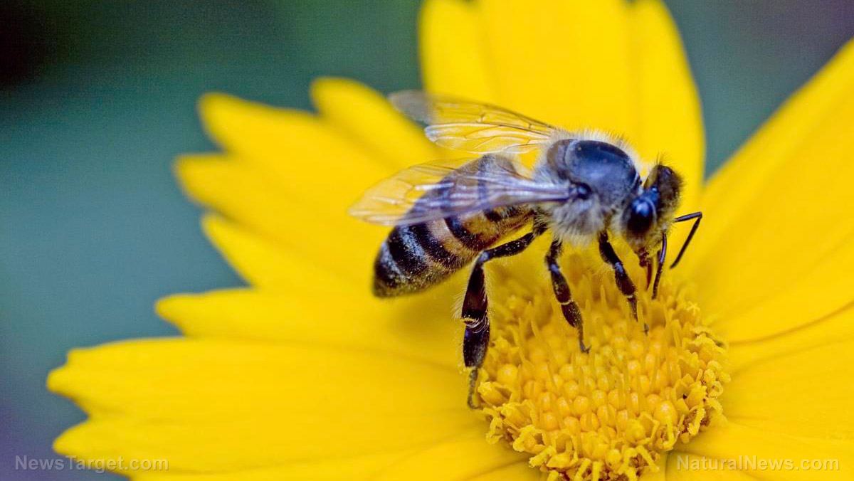 A bat signal for bees scientists have discovered that common what was thought to be a disorder in petal surfaces of certain flowers turned out to be an ingenious adaptation to attract bumblebees which are usually izmirmasajfo